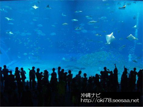 200709美ら海水族館〜大水槽.jpg